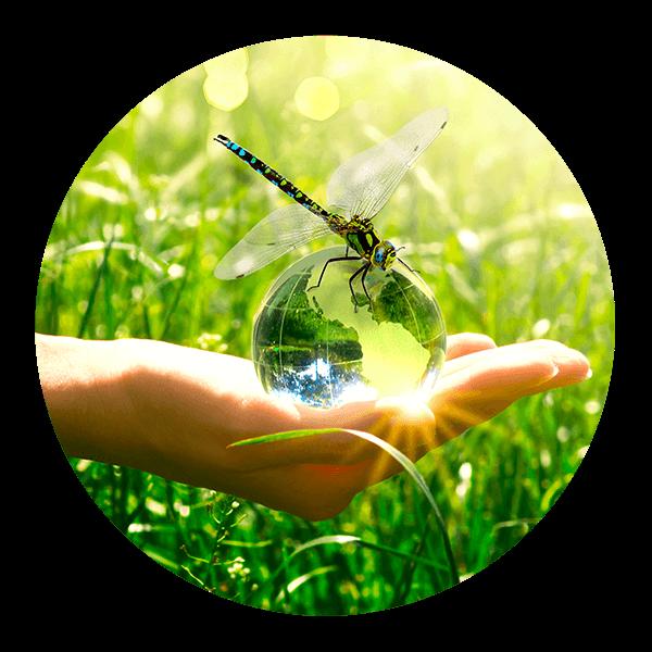 An Eco-Friendly Alternative